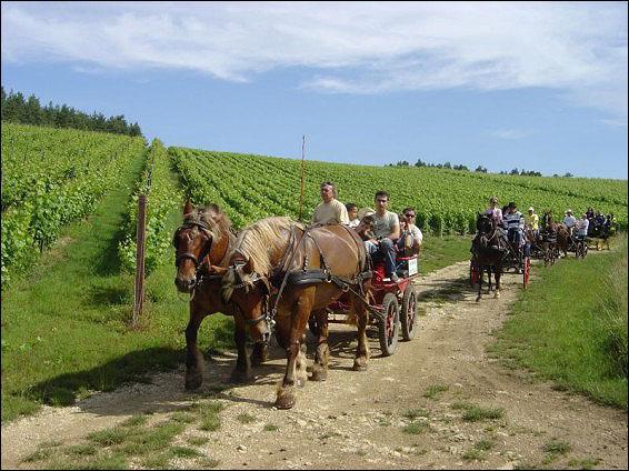 vingårdar frankrike karta Continent Holiday & Travel vingårdar frankrike karta